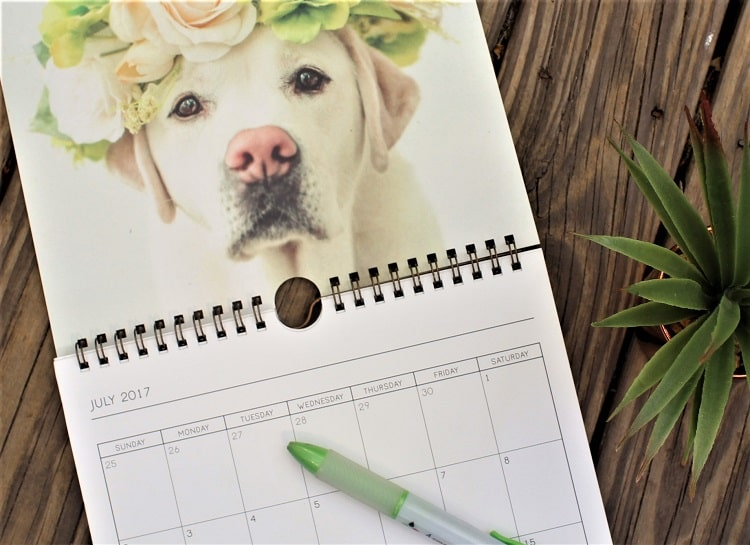How to find a pet sitter blog post. Image of dog calendar.