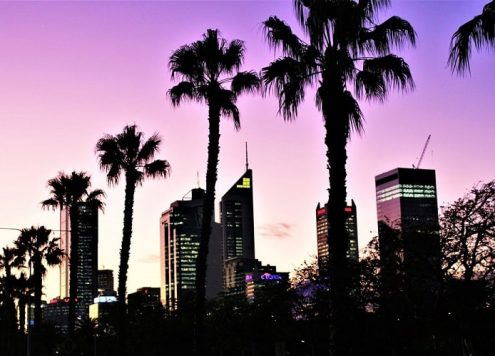 Beautiful purple sky and palm trees at sunset in Perth CBD.