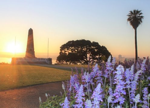Make the most of your visit to Perth by finding out 15 things to do in Kings Park. Includes bush tracks, amazing Perth viewpoints, cafes, guided tours & the Western Australia Botanic Garden.