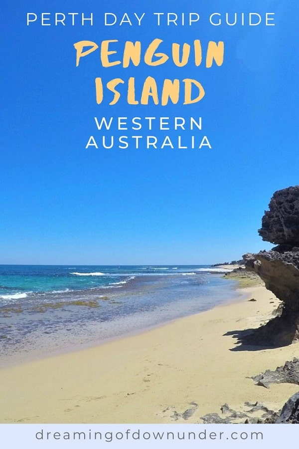 Enjoy a relaxed day trip from Perth at beautiful Penguin Island in Western Australia. Walk the nature trails, see little penguins, swim with dolphins, go on a wildlife cruise, kayak, snorkel and more.