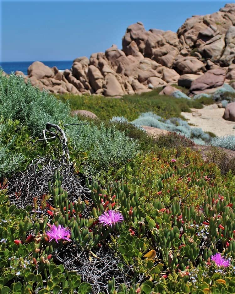 Wildflowers at Cape Naturaliste in WA.