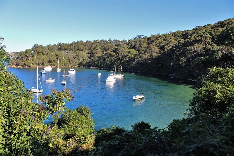 Discover 15 of the best walks in Sydney, including harbour walks, bush hiking trails and beautiful Sydney coastal walks such as Bondi to Coogee.