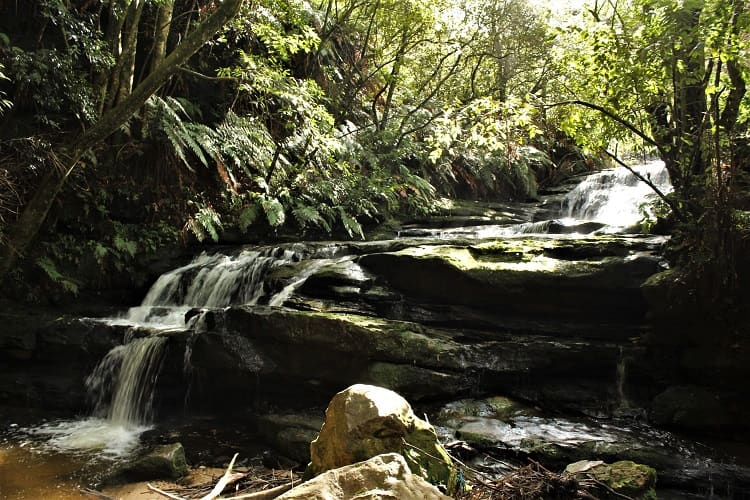 Leura Cascades: short Blue Mountains walks.