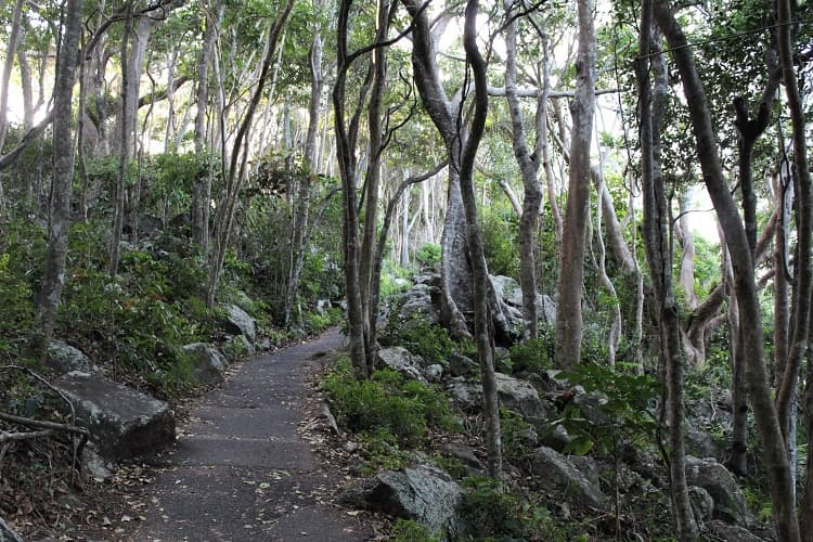 Walking track in Burleigh Head National Park.