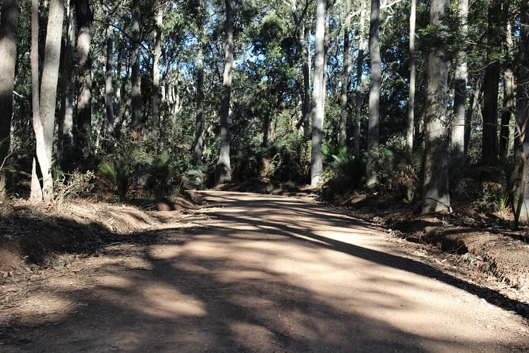 Driving through beautiful Murramarang National Park near Batemans Bay NSW. Discover what to see in this coastal wilderness.