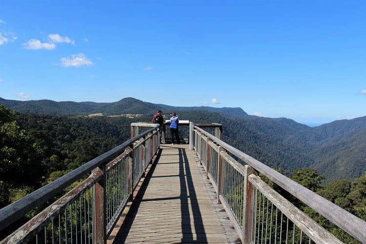 Skywalk at Dorrigo Rainforest Centre.