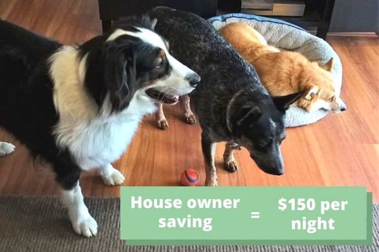 How much pet owners pay for kennels in Australia: picture of three dogs on a Sydney house sit.