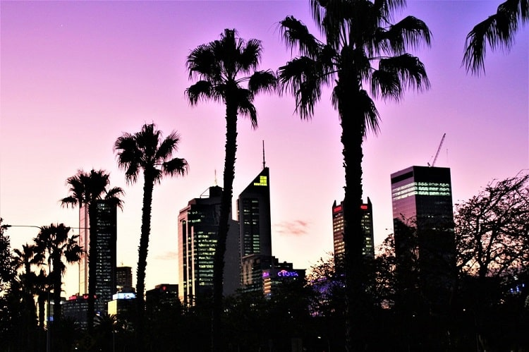 Beautiful picture of the Perth, Australia skyline at sunset with palm trees overhead.