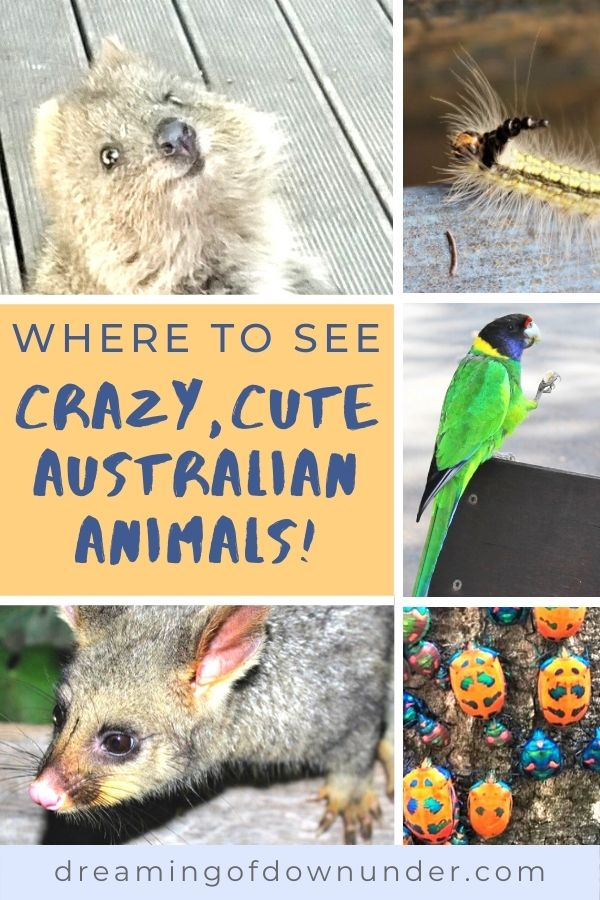 Discover weird & wonderful native Australian animals as well as the best zoos in Australia, snorkel & dive tours, cruises & wildlife parks.